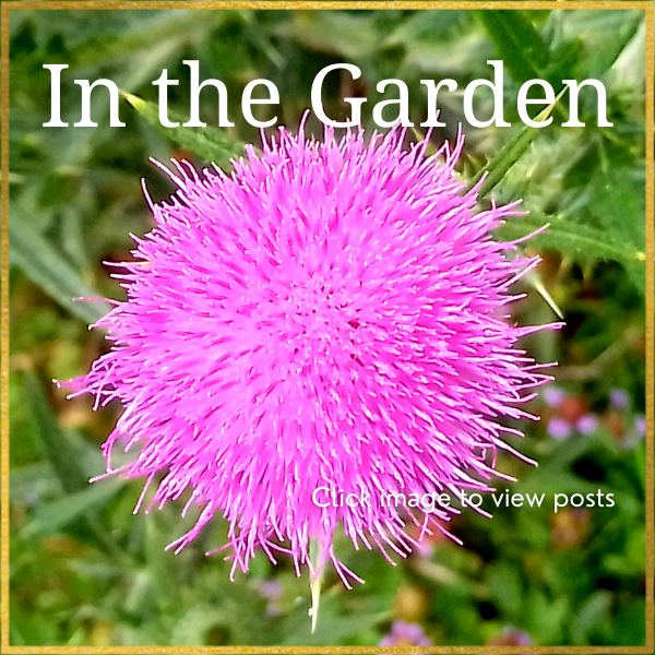 Click to view posts In the Garden